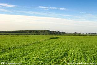 哈萨克农畜牧业投资项目